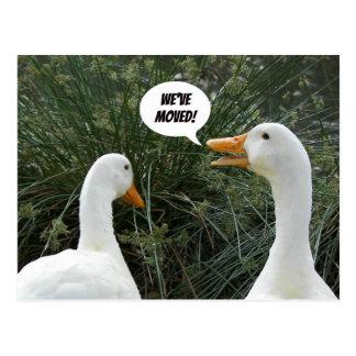 White Ducks Photo Change of Address Postcard