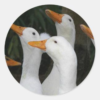 White Ducks Photo Classic Round Sticker
