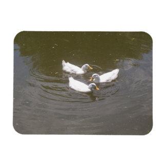 White Ducks Swimming Flexible Magnet