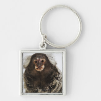 White eared Marmoset on branch, close up, studio Keychain