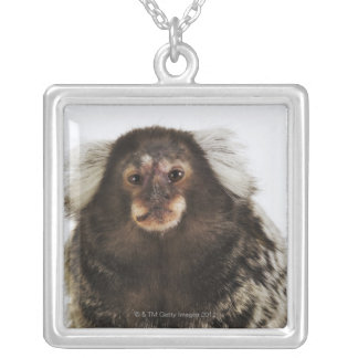 White eared Marmoset on branch, close up, studio Square Pendant Necklace