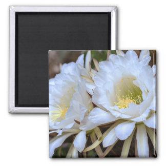 White Echinopsis Cactus Blooms - Magnet
