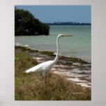 White Egret 2 Poster