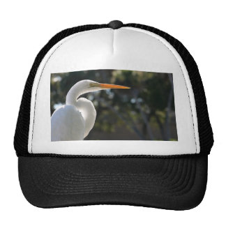 White Egret backlit looking right against trees Hat