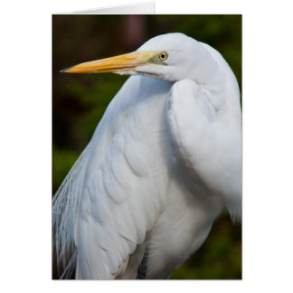 White Egret Card