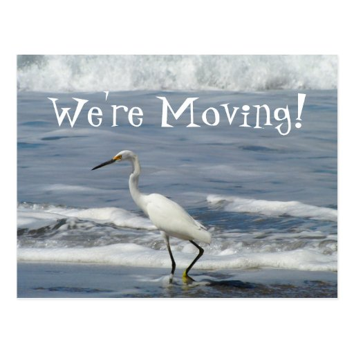 White Egret Fishing; Change of Address Postcard