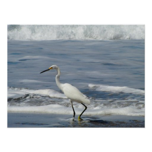 White Egret Fishing Poster
