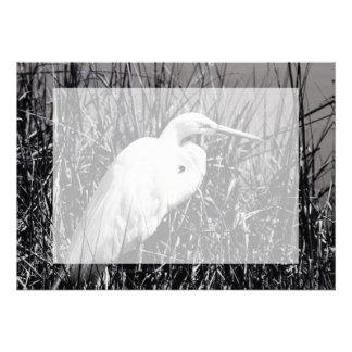 White Egret in reeds bw Invites