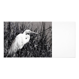 White Egret in reeds bw Photo Cards