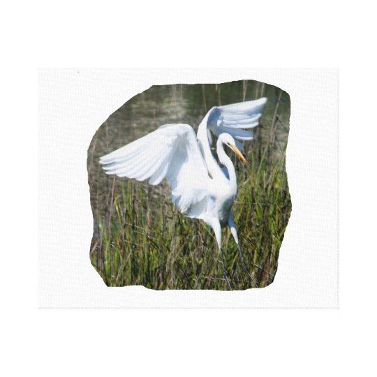 White Egret landing in marsh Canvas Print