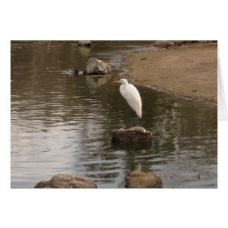 White Egret on Pond Card