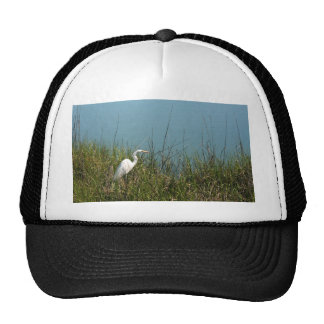 White egret standing in grass w water mesh hats