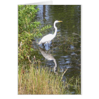 white egret with reflection card