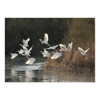 White Egrets Card