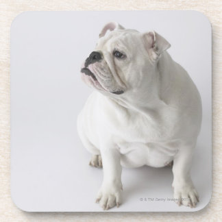 White English Bulldog Coaster