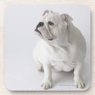 White English Bulldog Drink Coasters