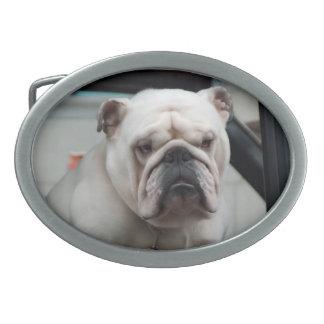 White English Bulldog Dog Belt Buckle