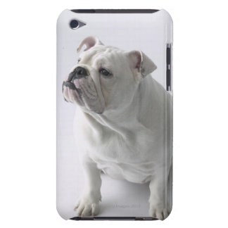 White English Bulldog sitting in studio, Barely There iPod Cases