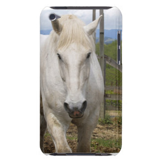 White Equine iTouch Case iPod Touch Case