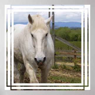 White Equine Poster