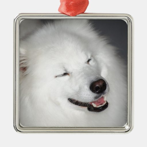 White Eskimo Dog  Ornament