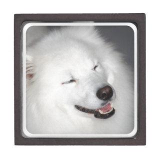 White Eskimo Dog Premium Gift Box