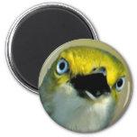 White-eyed Vireo Magnet