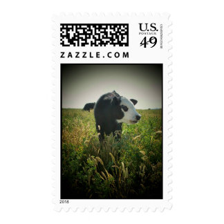 White Face in Pasture Postage Stamp
