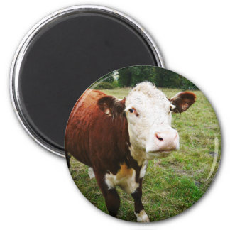 White Faced Beef Cow Fridge Magnet