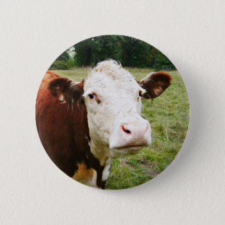 White Faced Beef Cow Pinback Button