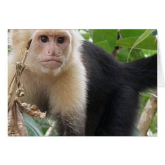 White Faced Capuccin Monkey Greeting Card