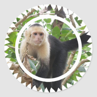 White Faced Capuccin Monkey Stickers
