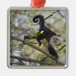 White-Faced Capuchin, Guanacaste, Costa Rica Square Metal Christmas Ornament