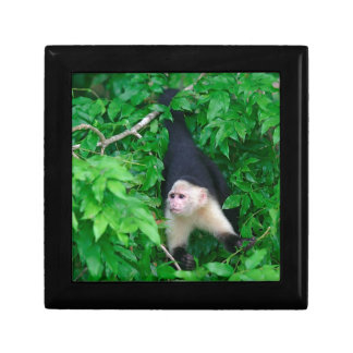 White faced capuchin monkey jewelry boxes