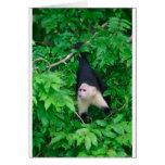 White faced capuchin monkey greeting card