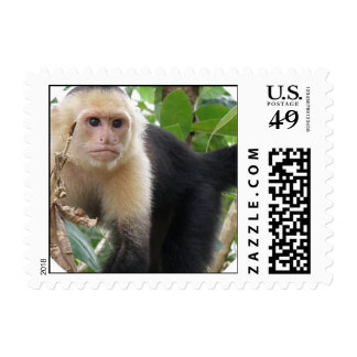 White Faced Capuchin Monkey Stamp