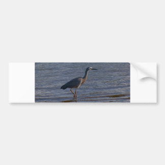 White-faced Heron Bumper Sticker