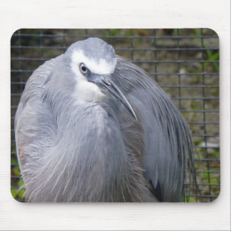 White-faced Heron Mouse Pad