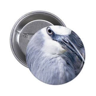 White-faced Heron Pinback Buttons