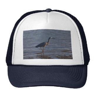 White-faced Heron Trucker Hat