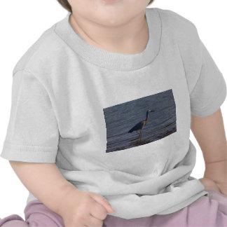 White-faced Heron Shirt