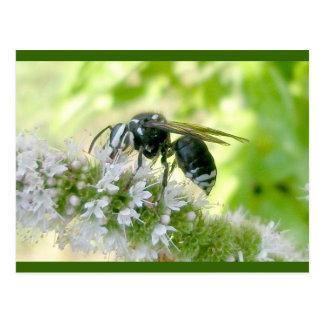 White-Faced Hornet Postcard