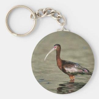 White-faced ibis key chain