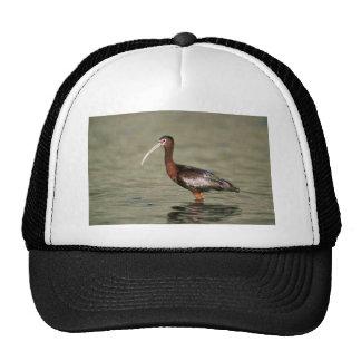 White-faced ibis trucker hat