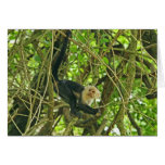 White Faced Monkey in Jungle Card