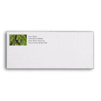 White Faced Monkey in Jungle Envelope