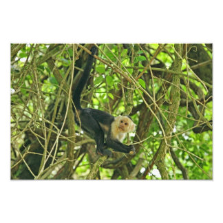White Faced Monkey in Jungle Photographic Print