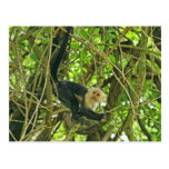 White Faced Monkey in Jungle Postcards