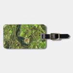 White Faced Monkey in Jungle Tags For Luggage