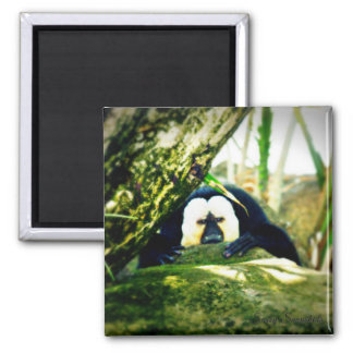 White-Faced Saki Monkey 2 Inch Square Magnet